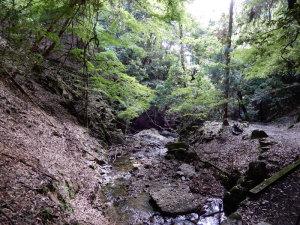春日山原生林